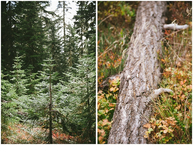 mt. baker hike | sharalee prang photography_478